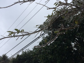 Ice continues to build on branches and power lines, posing threat to local residences