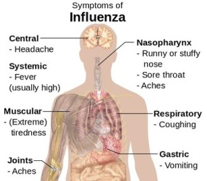 Areas affected and symptoms of the flu.